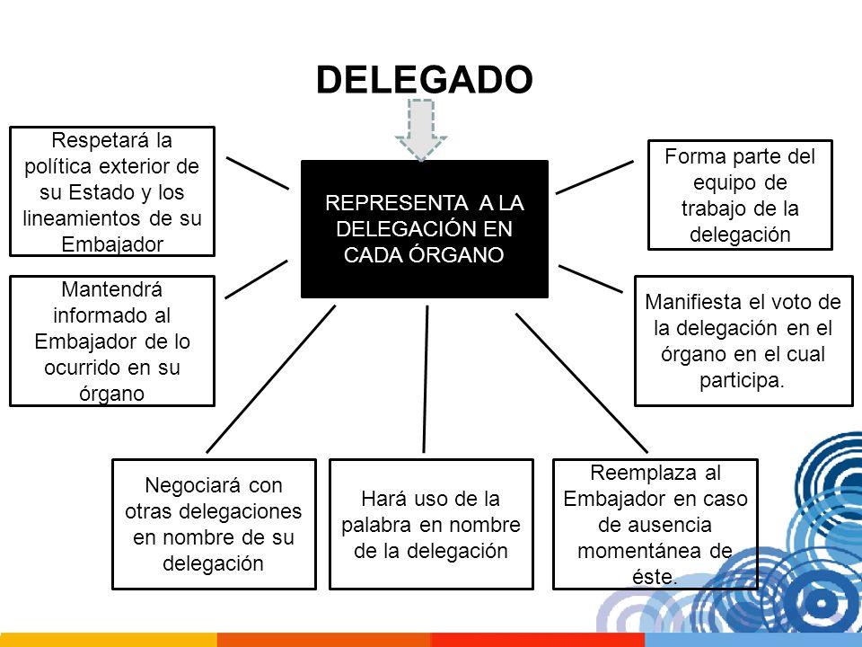 DELEGADO REPRESENTA A LA DELEGACIÓN EN CADA ÓRGANO Forma parte del equipo de trabajo de la delegación Manifiesta el voto de la delegación en el órgano