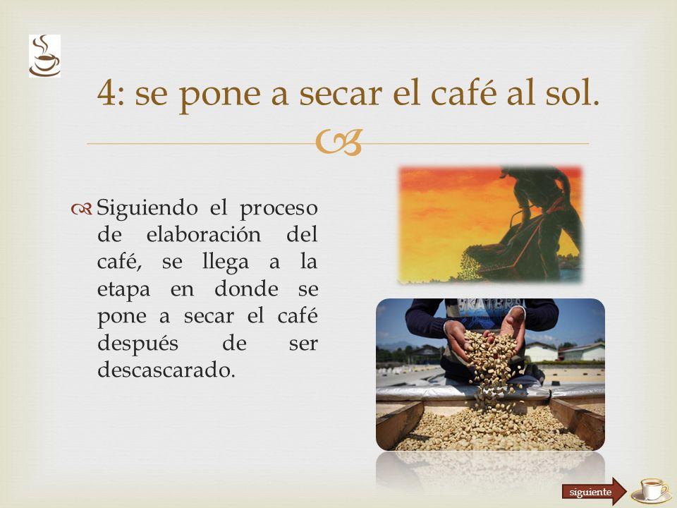Siguiendo el proceso de elaboración del café, se llega a la etapa en donde se pone a secar el café después de ser descascarado.
