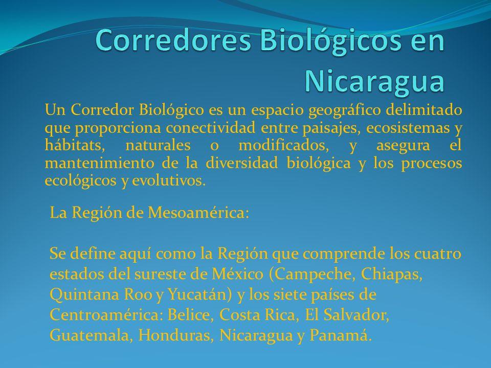 Desde su origen geológico, ya sea como un conjunto de islas o como una franja continental, Mesoamérica fue un centro de origen y un corredor de paso entre formas de vida terrestres, y una barrera para el desplazamiento de especies marinas, entre los océanos Atlántico y Pacífico.