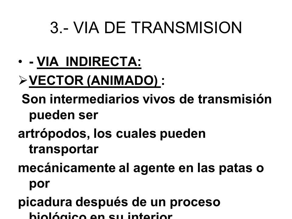 3.- VIA DE TRANSMISION - VIA INDIRECTA: VECTOR (ANIMADO) : Son intermediarios vivos de transmisión pueden ser artrópodos, los cuales pueden transporta