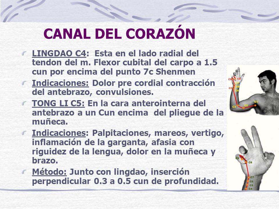 CANAL DEL CORAZÓN LINGDAO C4: Esta en el lado radial del tendon del m.