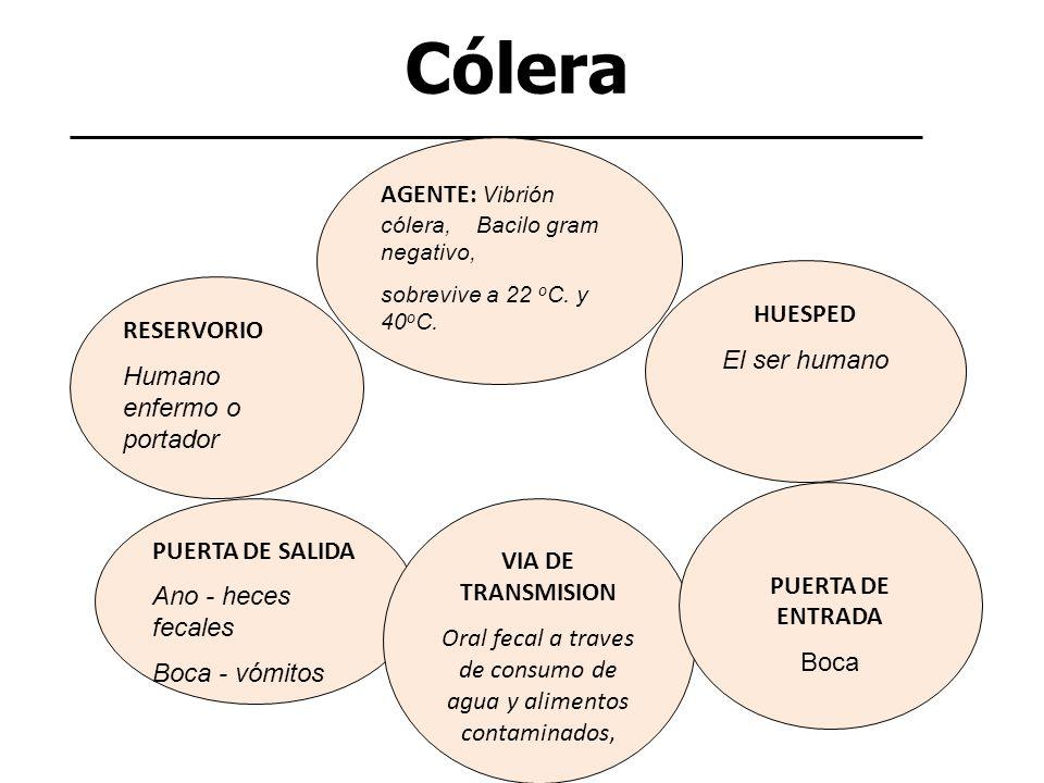 Cólera AGENTE: Vibrión cólera, Bacilo gram negativo, sobrevive a 22 o C. y 40 o C. RESERVORIO Humano enfermo o portador PUERTA DE SALIDA Ano - heces f
