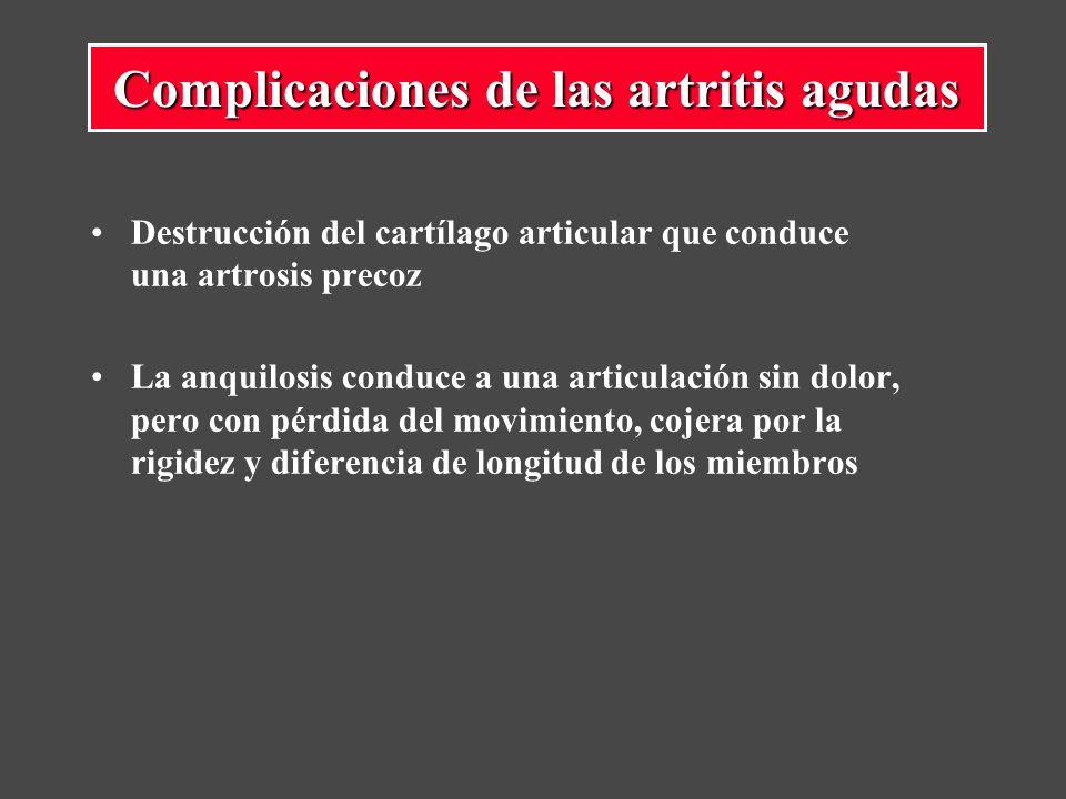 Destrucción del cartílago articular que conduce una artrosis precoz La anquilosis conduce a una articulación sin dolor, pero con pérdida del movimiento, cojera por la rigidez y diferencia de longitud de los miembros Complicaciones de las artritis agudas