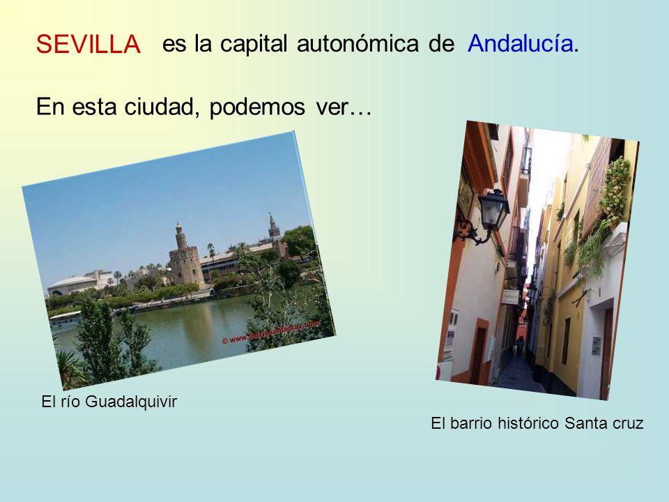 SEVILLA es la capital autonómica deAndalucía. En esta ciudad, podemos ver… El río Guadalquivir El barrio histórico Santa cruz