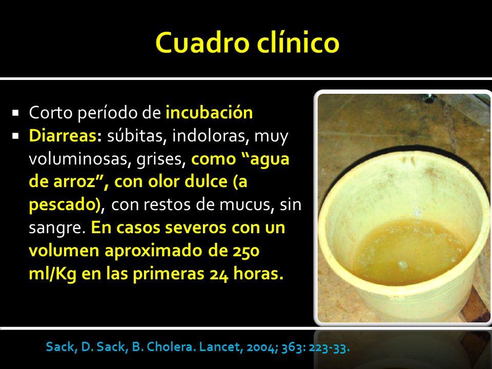 Corto período de incubación Diarreas: súbitas, indoloras, muy voluminosas, grises, como agua de arroz, con olor dulce (a pescado), con restos de mucus