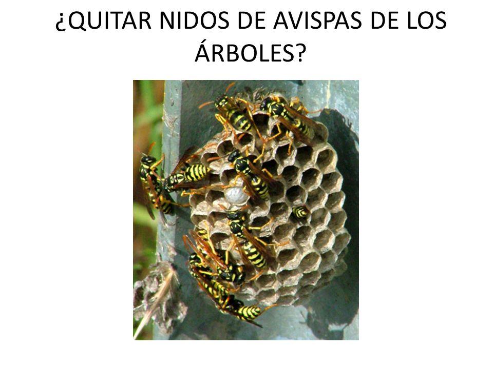 ¿QUITAR NIDOS DE AVISPAS DE LOS ÁRBOLES?