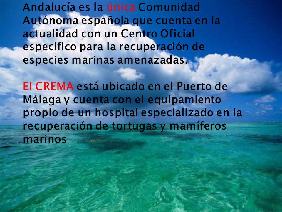 Andalucía es la única Comunidad Autónoma española que cuenta en la actualidad con un Centro Oficial especifico para la recuperación de especies marinas amenazadas.