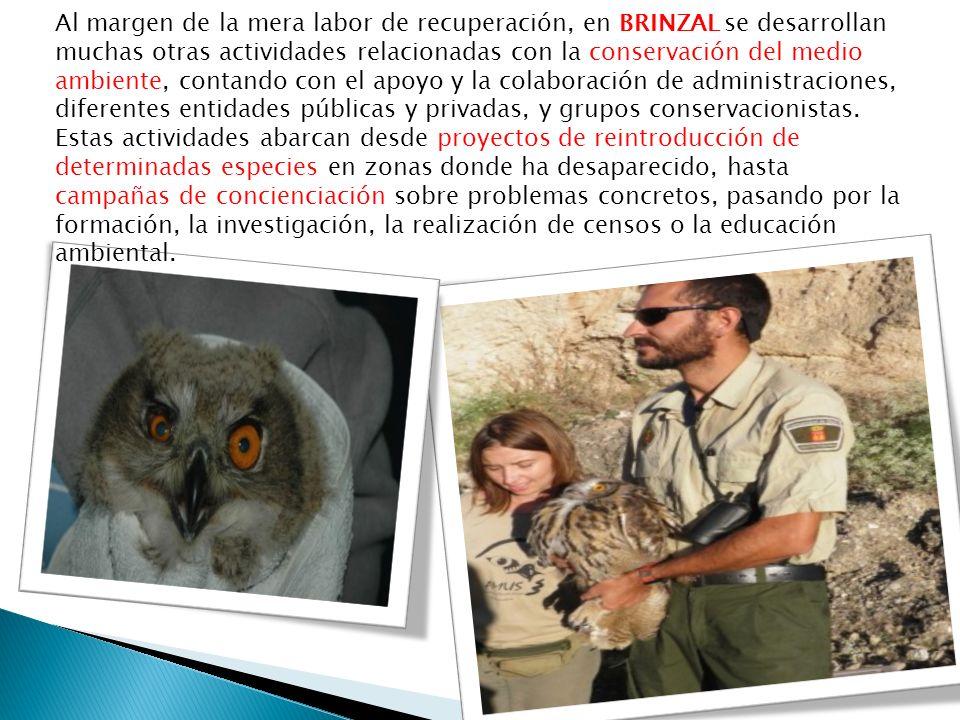 Al margen de la mera labor de recuperación, en BRINZAL se desarrollan muchas otras actividades relacionadas con la conservación del medio ambiente, contando con el apoyo y la colaboración de administraciones, diferentes entidades públicas y privadas, y grupos conservacionistas.