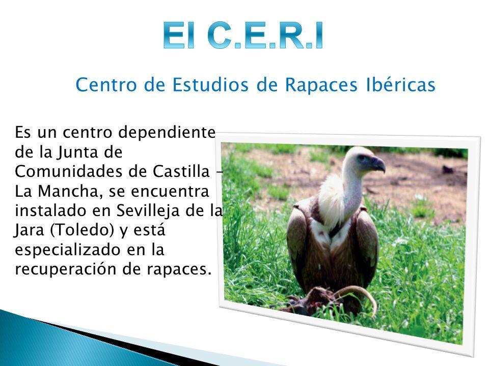 Centro de Estudios de Rapaces Ibéricas Es un centro dependiente de la Junta de Comunidades de Castilla – La Mancha, se encuentra instalado en Sevilleja de la Jara (Toledo) y está especializado en la recuperación de rapaces.