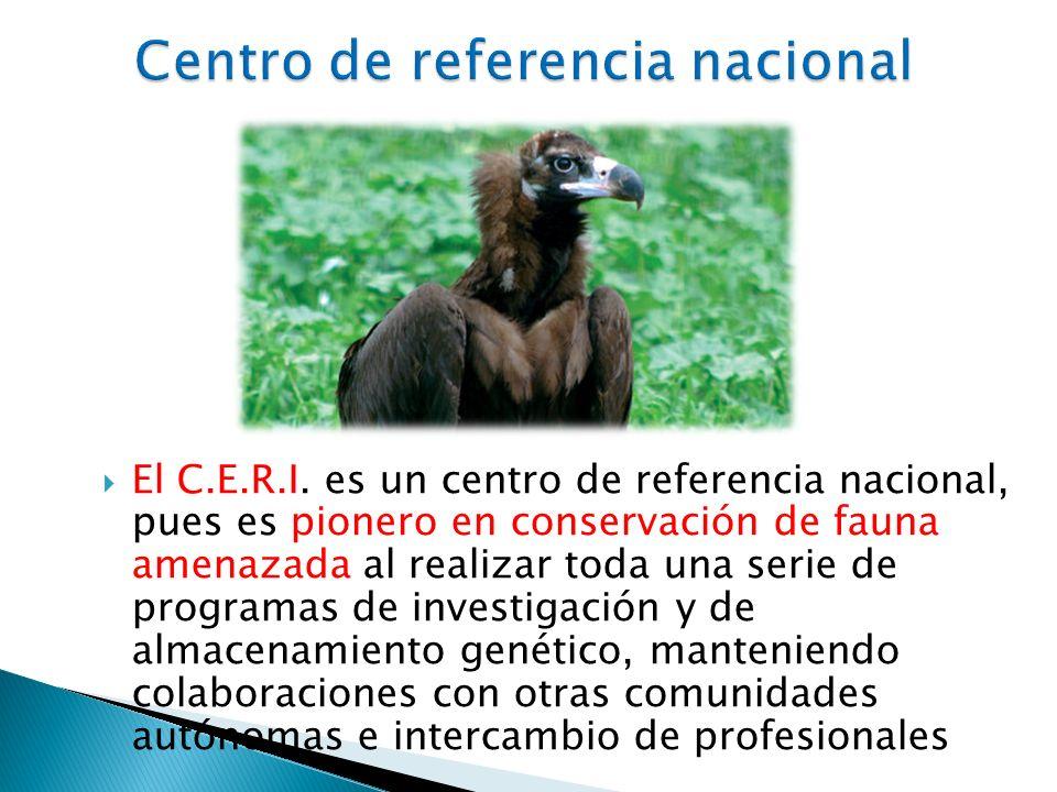 El C.E.R.I.
