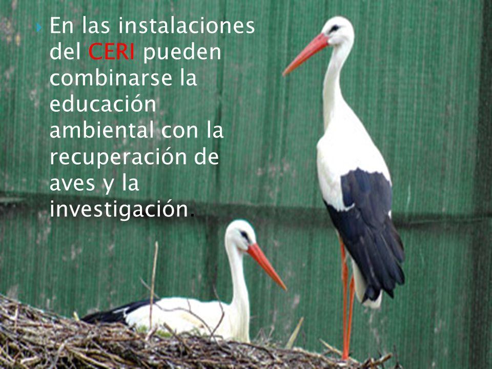 En las instalaciones del CERI pueden combinarse la educación ambiental con la recuperación de aves y la investigación.