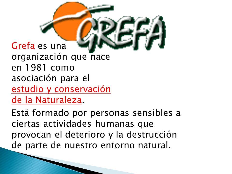 Grefa es una organización que nace en 1981 como asociación para el estudio y conservación de la Naturaleza.