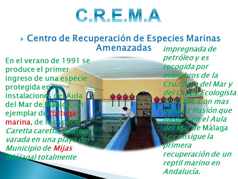 Centro de Recuperación de Especies Marinas Amenazadas impregnada de petróleo y es recogida por miembros de la Cruz Roja del Mar y del Grupo Ecologista SILVEMA.