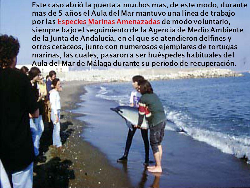 Este caso abrió la puerta a muchos mas, de este modo, durante mas de 5 años el Aula del Mar mantuvo una línea de trabajo por las Especies Marinas Amenazadas de modo voluntario, siempre bajo el seguimiento de la Agencia de Medio Ambiente de la Junta de Andalucía, en el que se atendieron delfines y otros cetáceos, junto con numerosos ejemplares de tortugas marinas, las cuales, pasaron a ser huéspedes habituales del Aula del Mar de Málaga durante su periodo de recuperación.