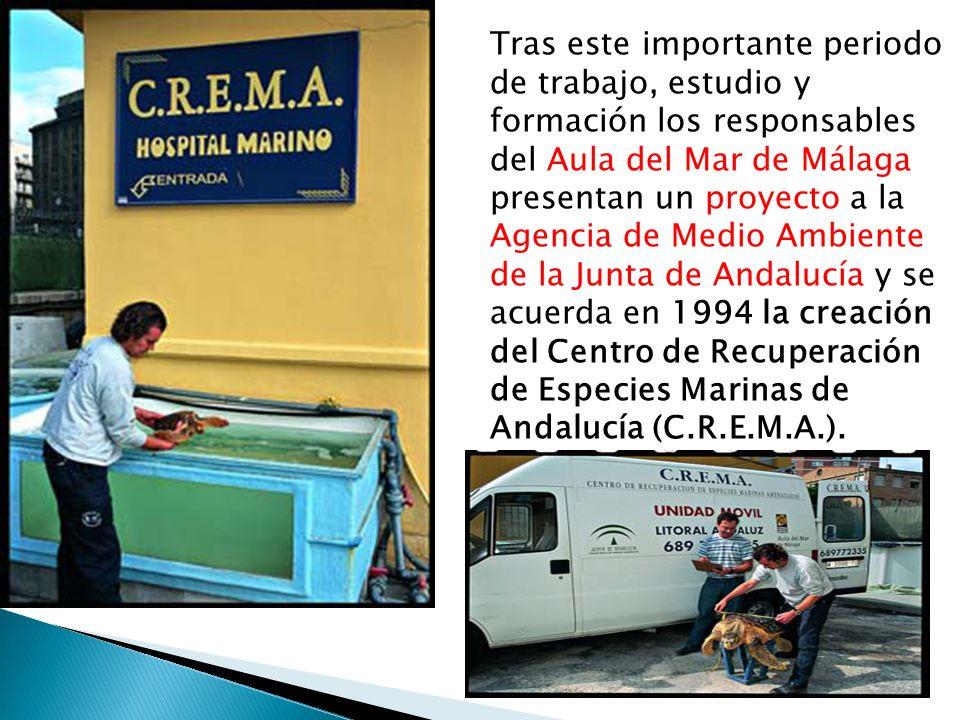 Tras este importante periodo de trabajo, estudio y formación los responsables del Aula del Mar de Málaga presentan un proyecto a la Agencia de Medio Ambiente de la Junta de Andalucía y se acuerda en 1994 la creación del Centro de Recuperación de Especies Marinas de Andalucía (C.R.E.M.A.).
