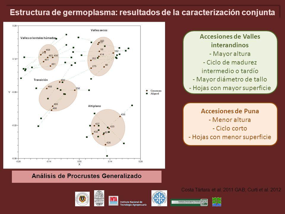 Estructura de germoplasma: resultados de la caracterización conjunta Valles secos Transición Altiplano Valles orientales húmedos Análisis de Procruste