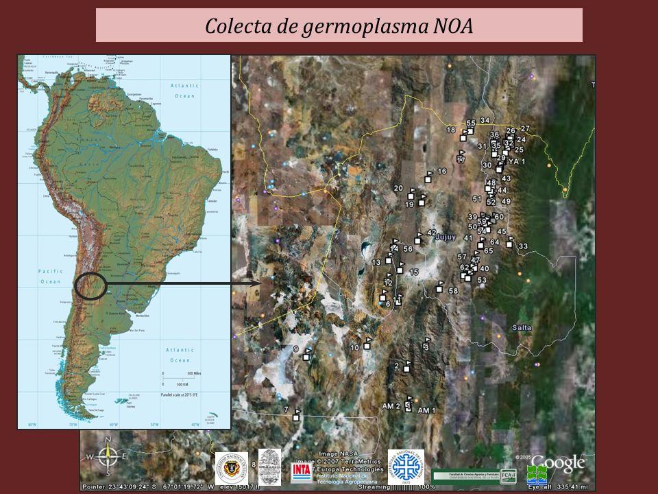 Colecta de germoplasma NOA