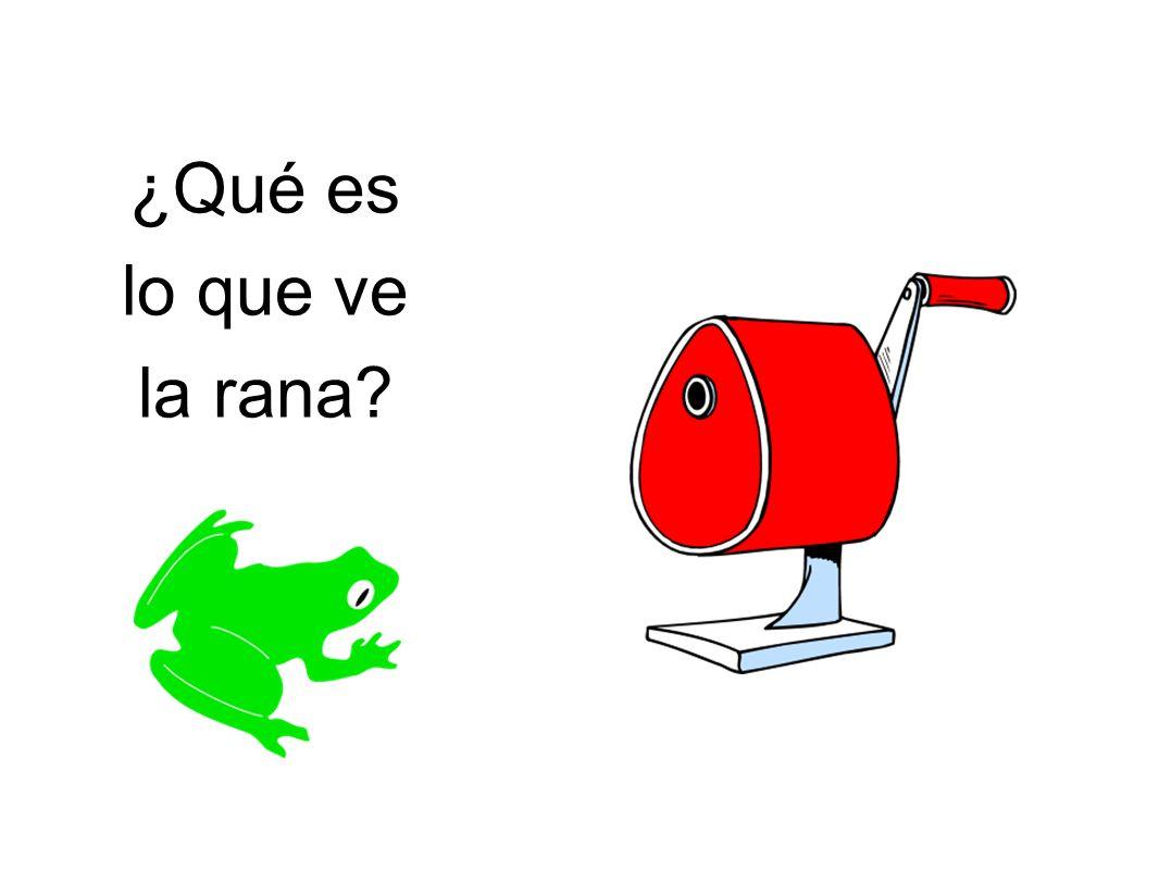 ¿Qué es lo que ve la rana?