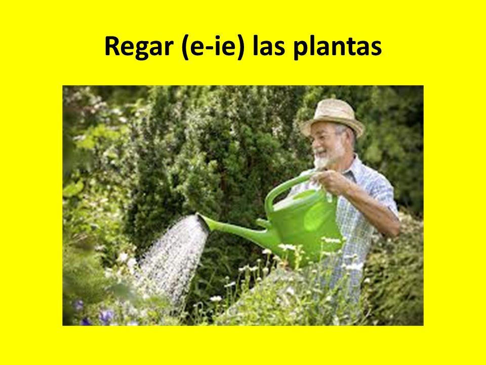 Regar (e-ie) las plantas