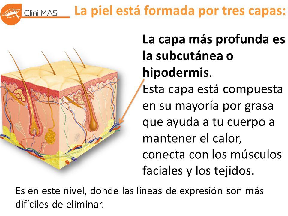 La piel está formada por tres capas: La capa más profunda es la subcutánea o hipodermis.