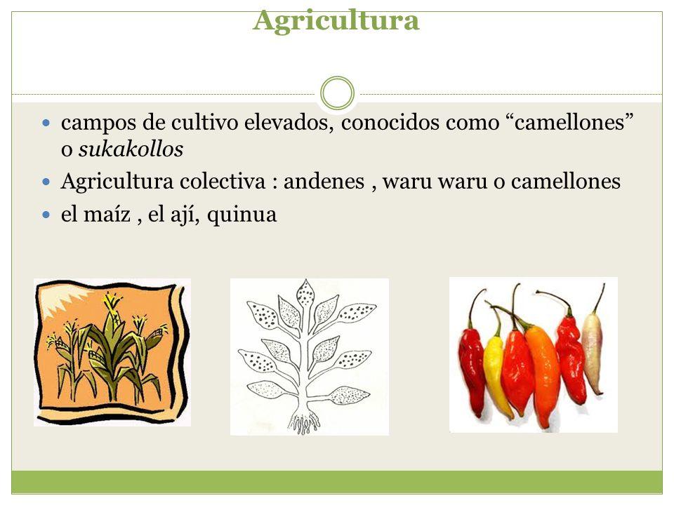 Agricultura campos de cultivo elevados, conocidos como camellones o sukakollos Agricultura colectiva : andenes, waru waru o camellones el maíz, el ají