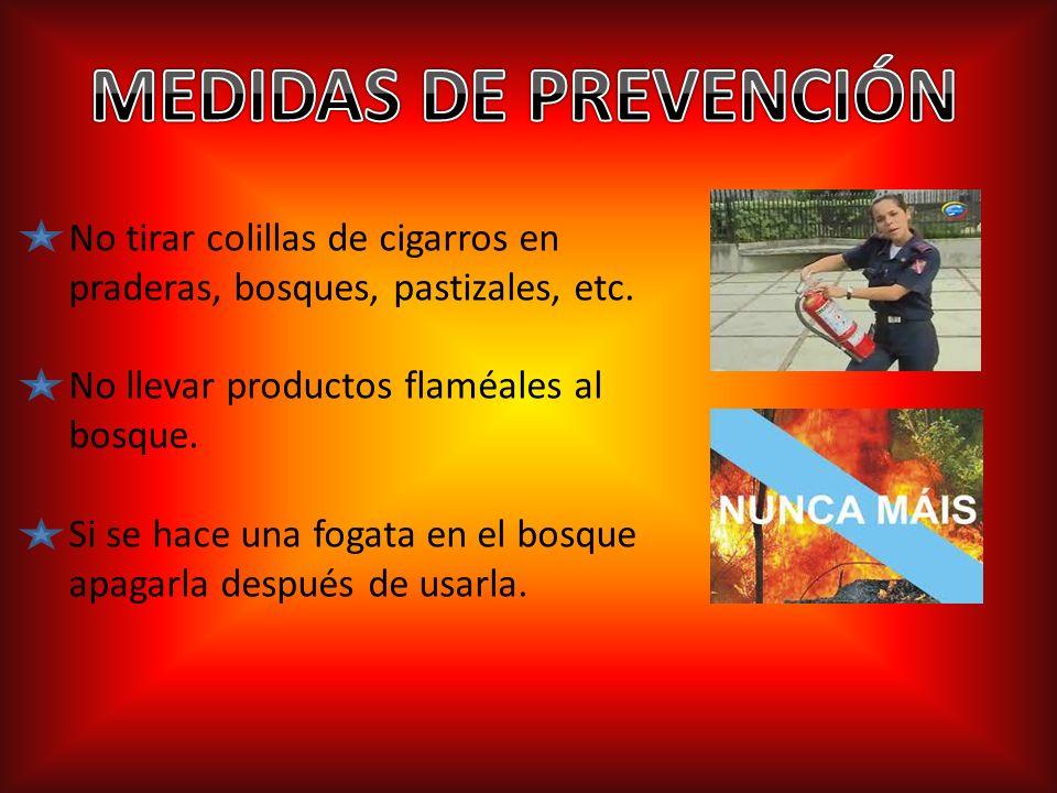 No tirar colillas de cigarros en praderas, bosques, pastizales, etc.