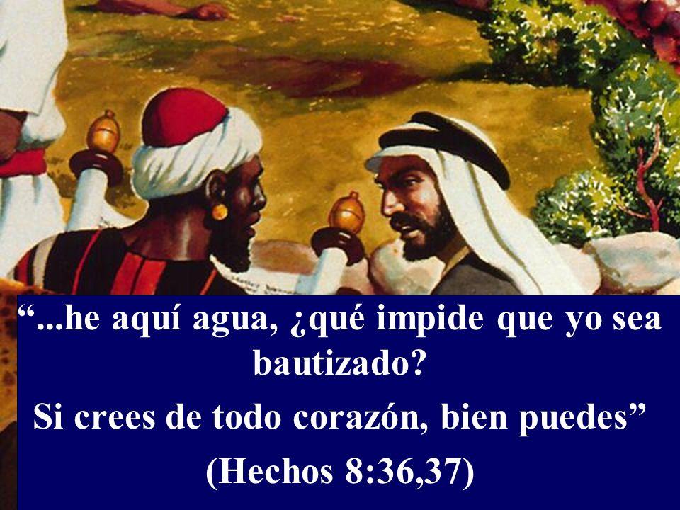 ...he aquí agua, ¿qué impide que yo sea bautizado? Si crees de todo corazón, bien puedes (Hechos 8:36,37)