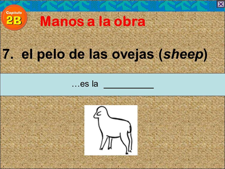 7. el pelo de las ovejas (sheep) Manos a la obra …es la