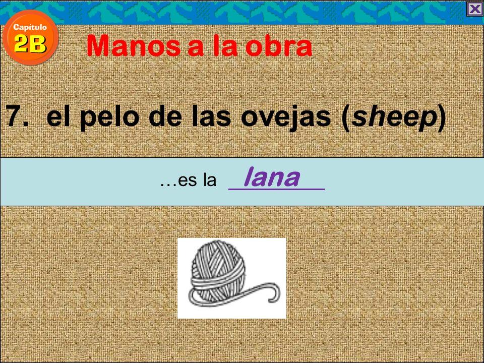 7. el pelo de las ovejas (sheep) Manos a la obra …es la lana