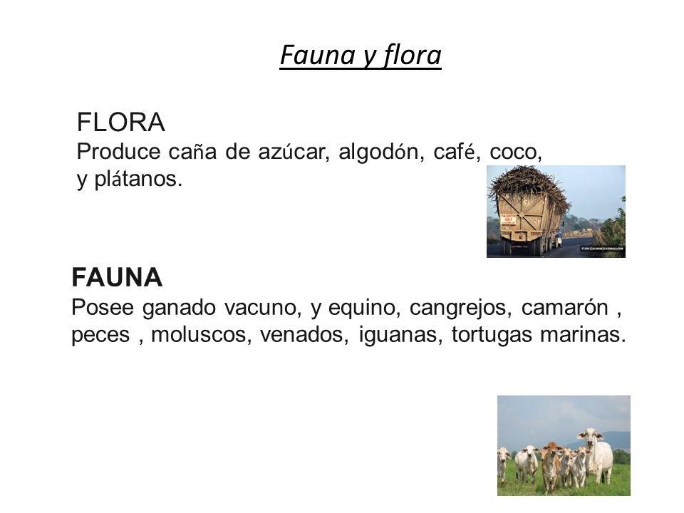 Fauna y flora FLORA Produce ca ñ a de az ú car, algod ó n, caf é, coco, y pl á tanos.