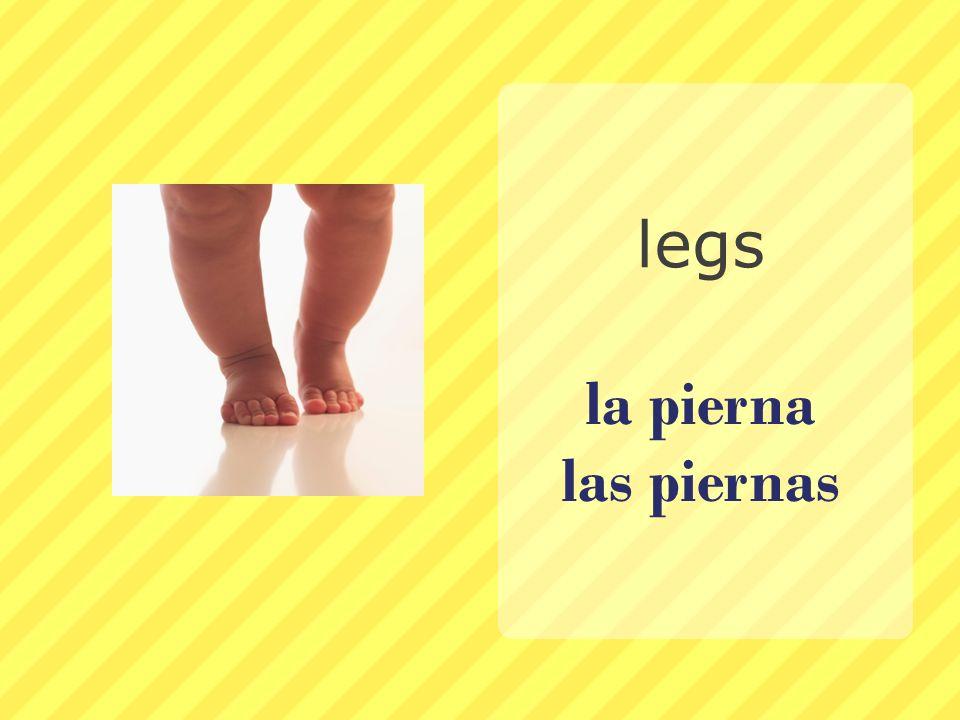 la pierna las piernas legs