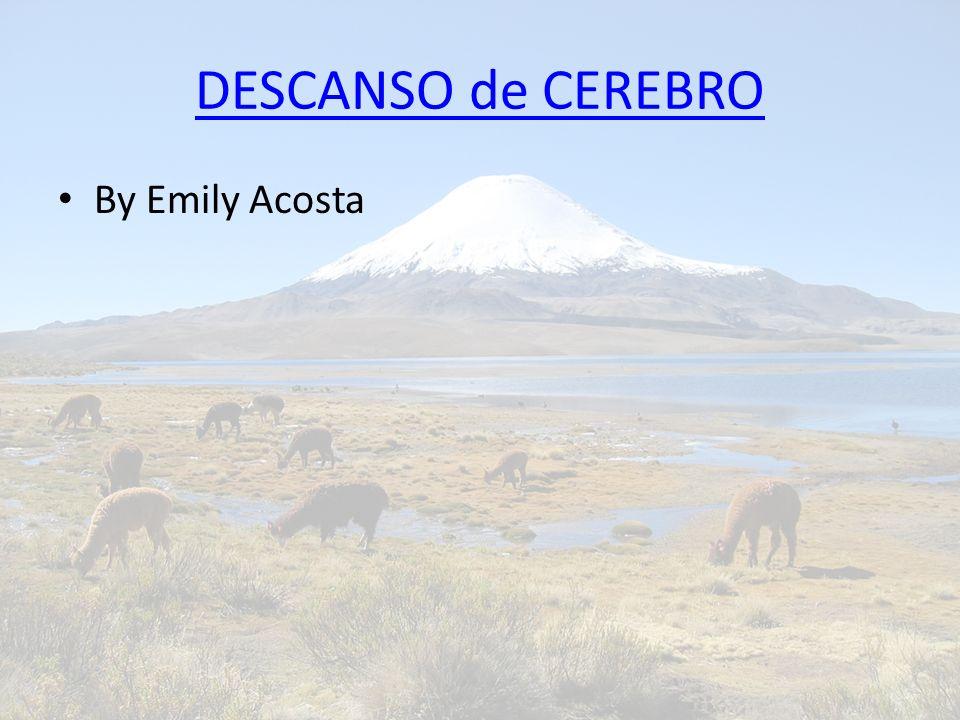 DESCANSO de CEREBRO By Emily Acosta