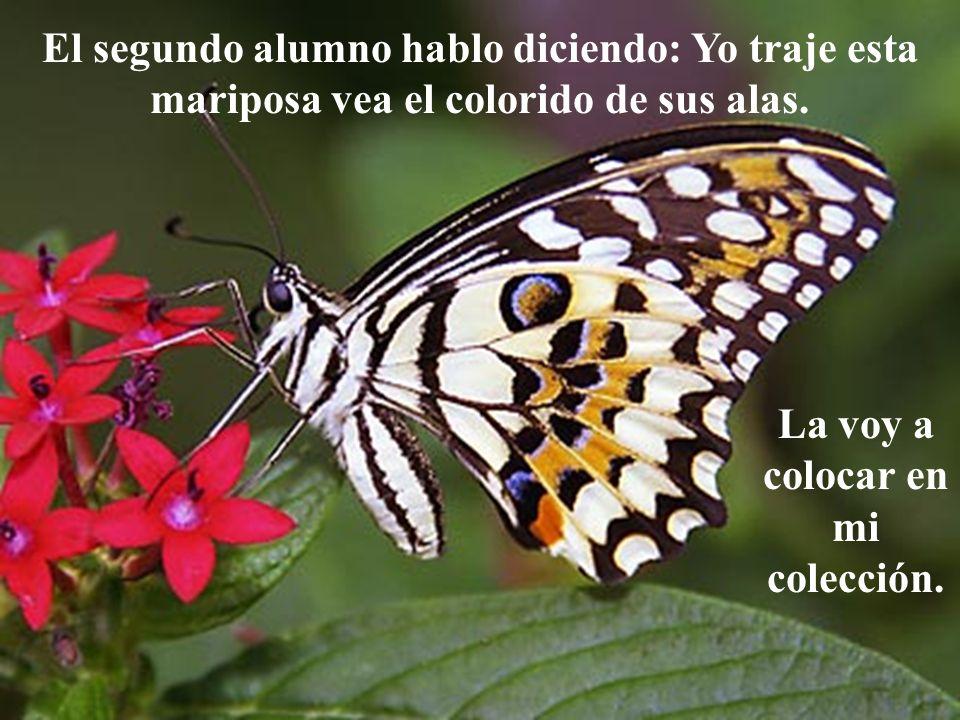 El segundo alumno hablo diciendo: Yo traje esta mariposa vea el colorido de sus alas. La voy a colocar en mi colección.