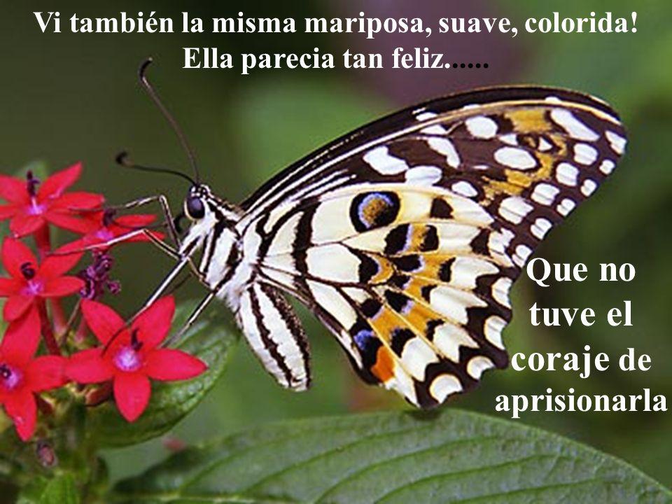 Vi también la misma mariposa, suave, colorida! Ella parecia tan feliz...... Q ue no tuve el coraje de aprisionarla