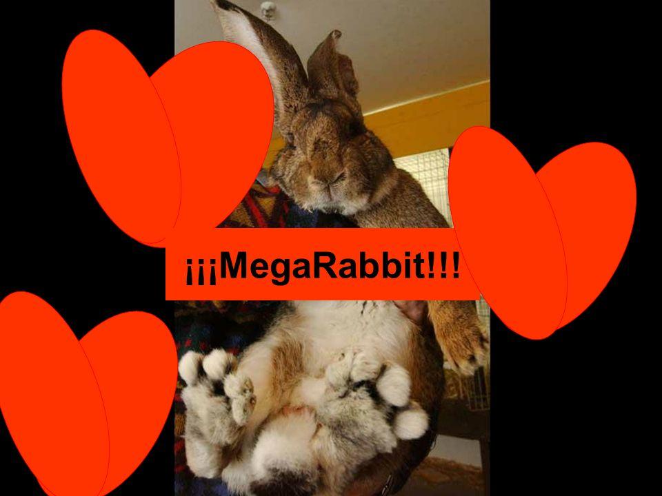 ¡¡¡MegaRabbit!!!