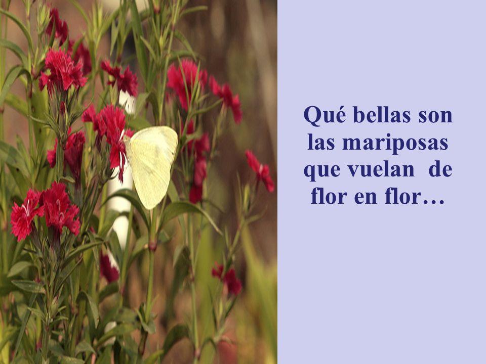 Qué bello es comtemplar las flores y aspirar su fragancia…