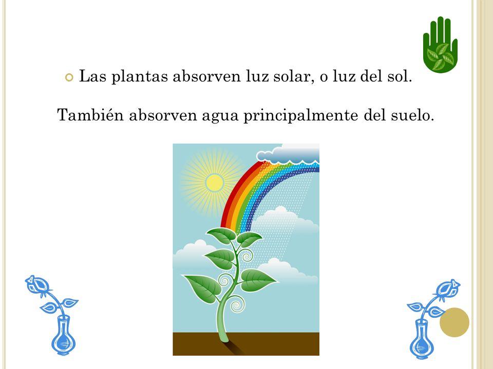 Una planta también necesita agua para que el alimento pueda circular por todas sus partes.