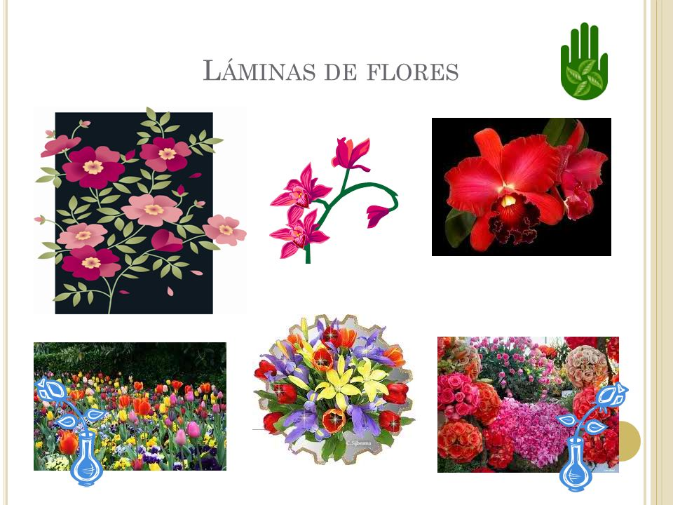 L AS FLORES Muchas plantas tienen flores. Las flores producen los frutos.