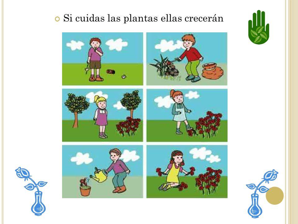 PASO #4 Cuarto: Las flores producen los frutos que contienen las semillas. Las semillas pueden convertirse en otras plantas.