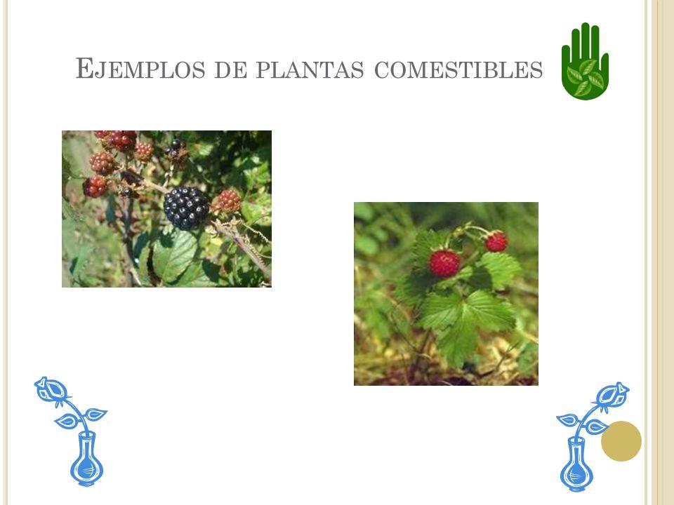 P LANTAS QUE SE PUEDEN COMER Las plantas comestibles se pueden comer sin peligro. Algunas clases de plantas que tienen partes comestibles son: Los tom