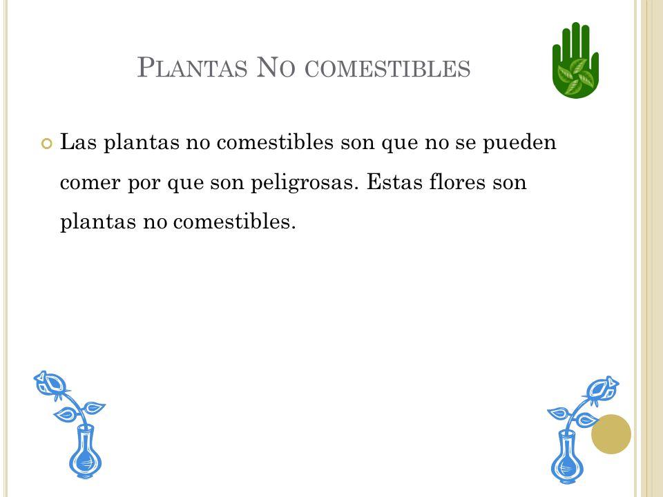 E JEMPLOS DE PLANTAS COMESTIBLES