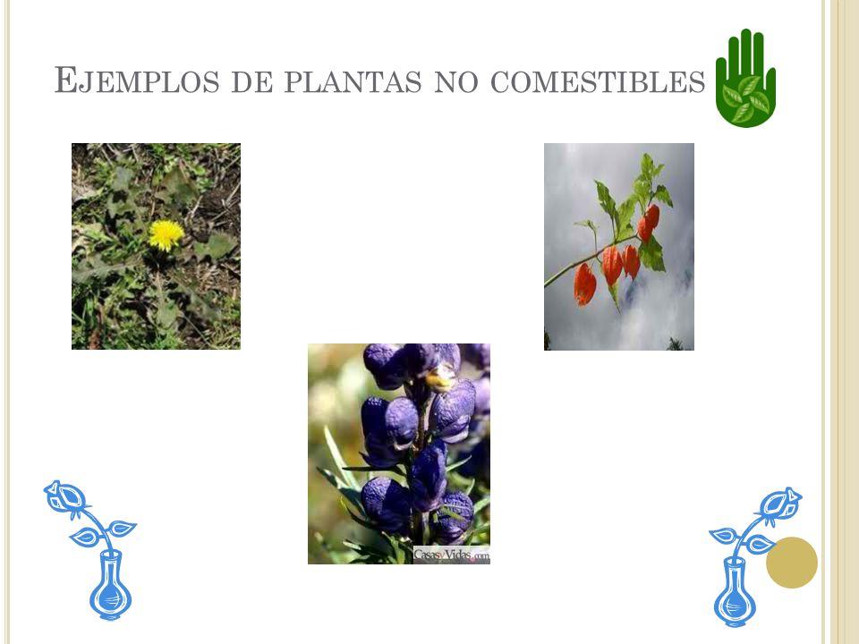 P LANTAS N O COMESTIBLES Las plantas no comestibles son que no se pueden comer por que son peligrosas. Estas flores son plantas no comestibles.