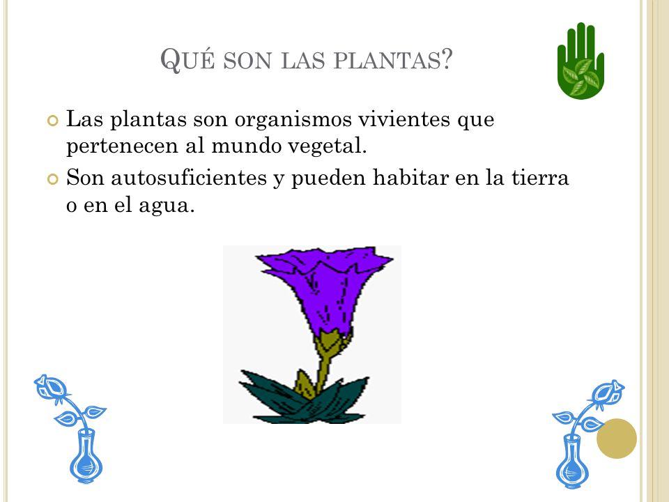 L AS PLANTAS