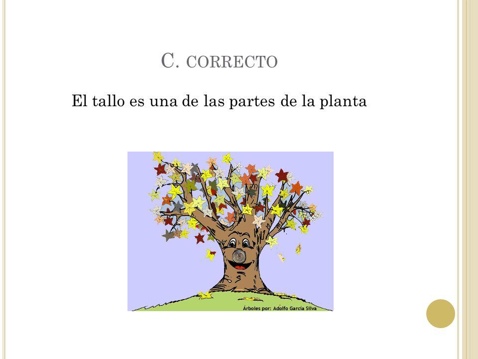 B. INCORRECTO Las plantas no tienen ojos.