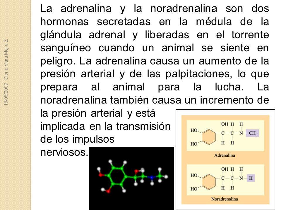 La adrenalina y la noradrenalina son dos hormonas secretadas en la médula de la glándula adrenal y liberadas en el torrente sanguíneo cuando un animal