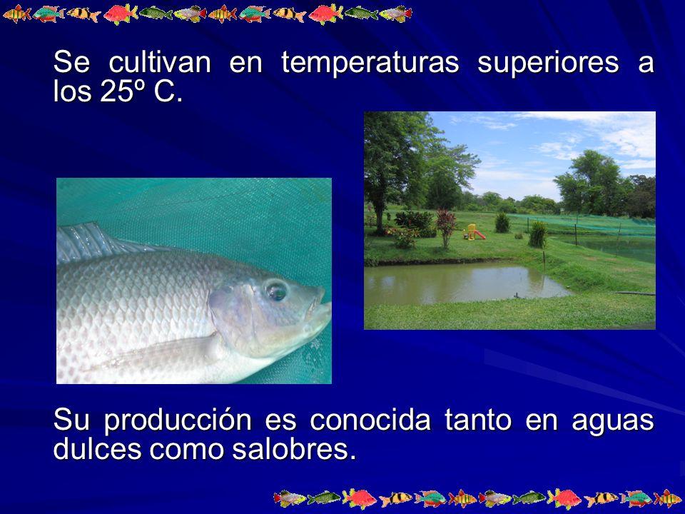 Los reproductores se encuentran en un estanque de concreto rectangular de 5 m de ancho por 10 m de largo, con una capacidad de 50,000 litros de agua.