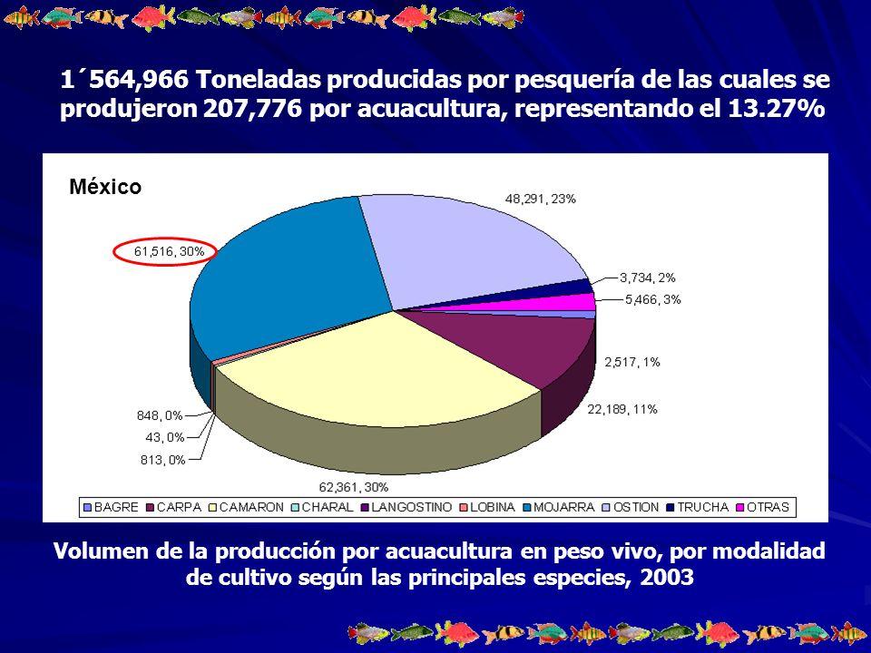 PRODUCCIÓN MEXICANA DE TILAPIAS POR ACUACULTURA