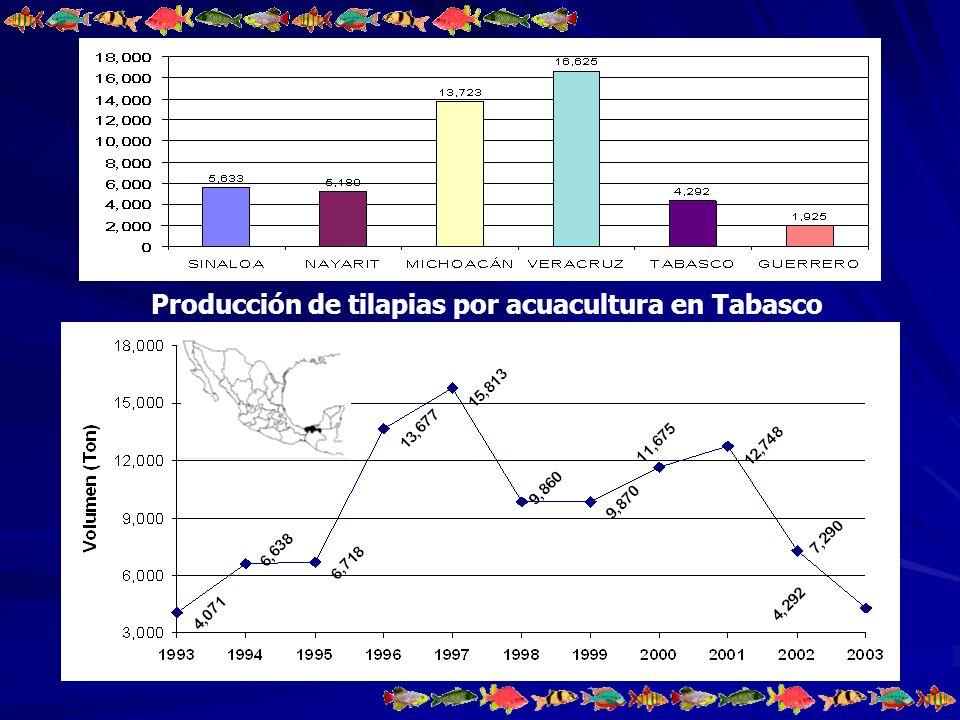 Situación actual en el cultivo de la tilapia en Tabasco El estado cuenta con 5 centros de producción de crías y dos granjas acuícolas comerciales semi-intensivas.
