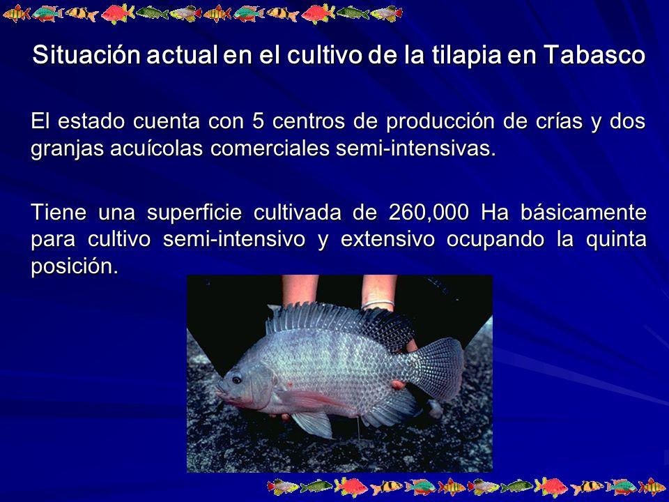 RESULTADOS Crecimiento en peso (Promedio (g) ± ES) de juveniles de la tilapia del Nilo.