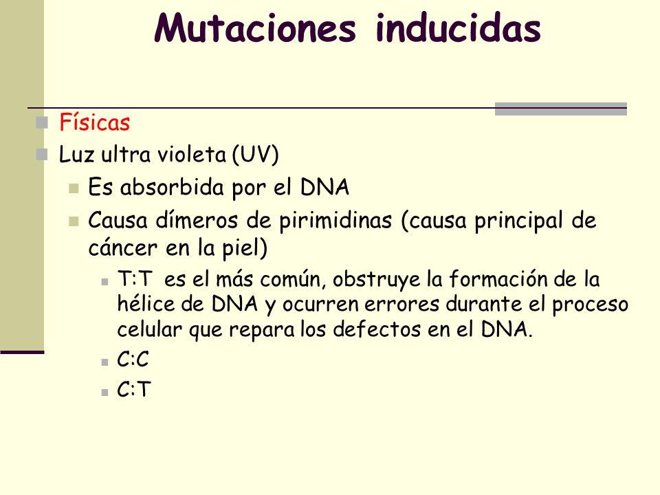Mutaciones inducidas Químicos Tintes de acridina Causa deleción o inserción de bases Alteran el marco de lectura Resultan en la producción de un gen no funcional